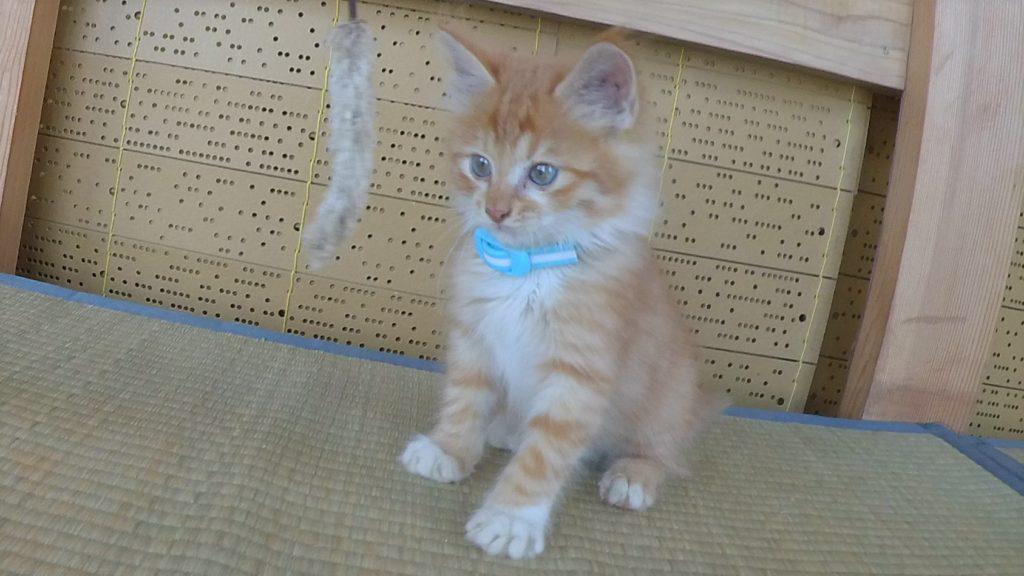 新スタッフの「こまちゃん」!狛猫様のお名前をいただきました。